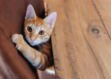 How To Keep Cats From Scratching Furniture Using Vinegar