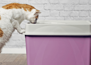 Top Entry Cat Litter Boxes